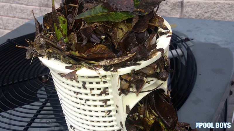 Debris should be cleaned out from baskets and filter immediately after a storm