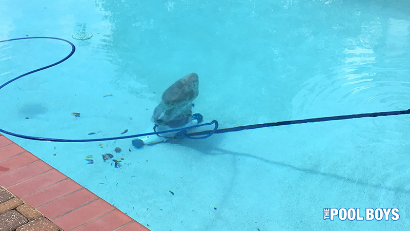 Hammerhead pool vac in use on a customer pool