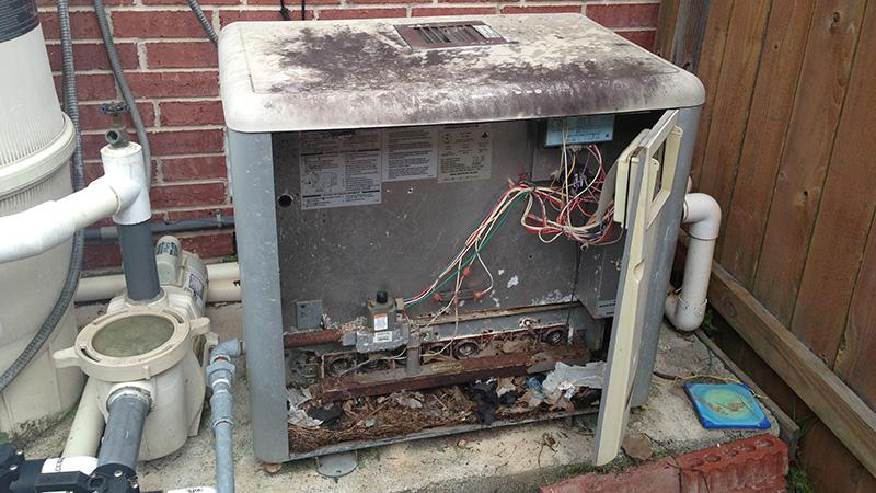 rat infested pool heater needs service