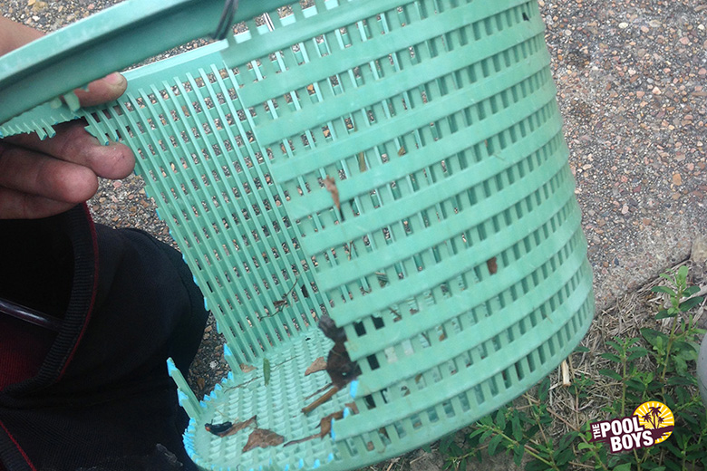 A cracked or broken skimmer basket should be replaced